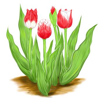 Spring flowers tulip