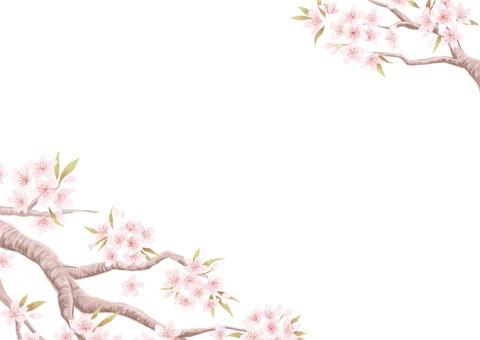 掛け軸風 桜イラスト