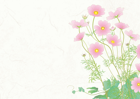 Japanese paper background _ Cosmos