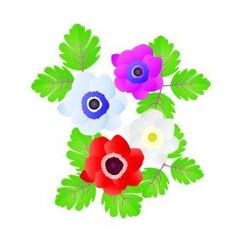 Colorful anemone