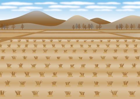 Paddy field 06
