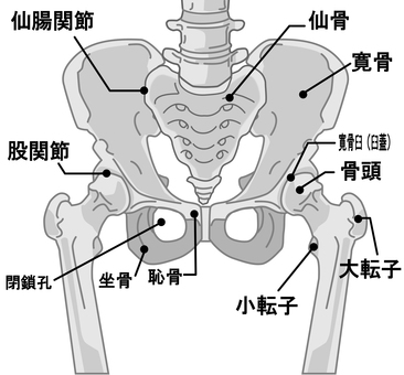 Bone name around the pelvis