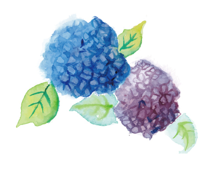 Watercolor illustration hydrangea