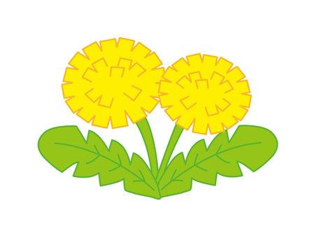 Cute dandelion flower