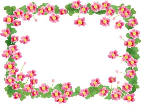 Shuigi chrysanthemum (Shumeigaku) pink frame