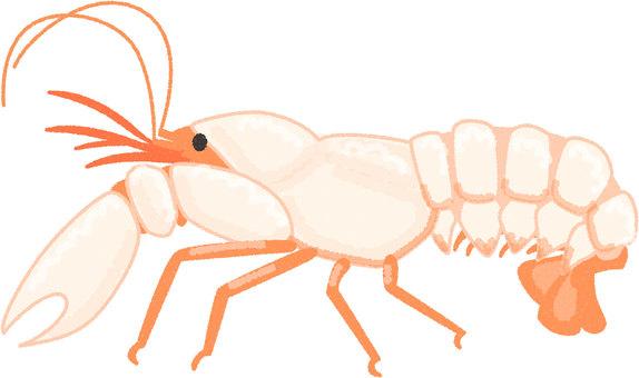 Okina shrimp