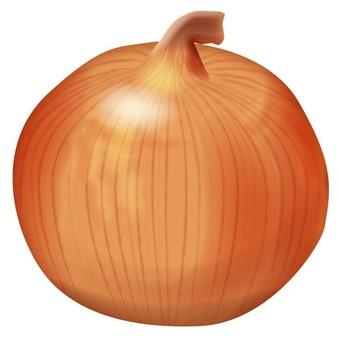 Onion 1 / Vegetable