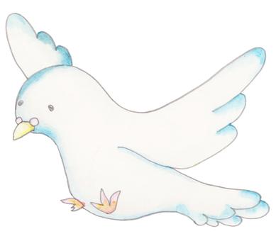 Pigeons (white)