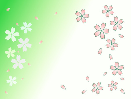 Cherry blossom petals green and white background