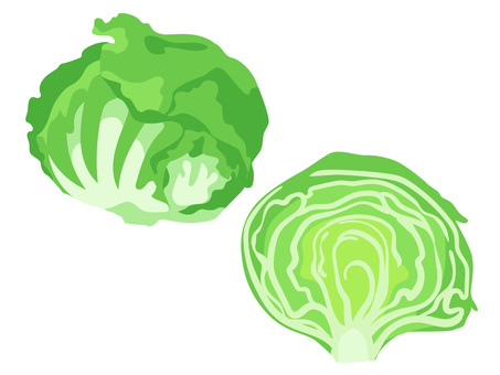 Ingredients _ Vegetable _ Lettuce _ No Line
