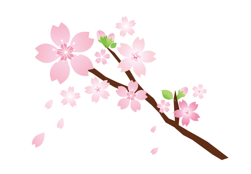 Pink and cute cherry tree branch / for title decoration