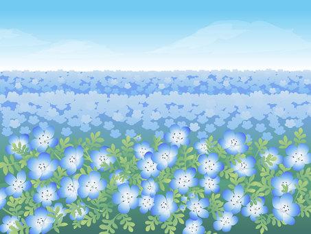 네모 피라의 꽃밭