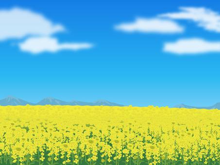 Rape flower's landscape Landscape 02