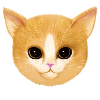 갈색 고양이