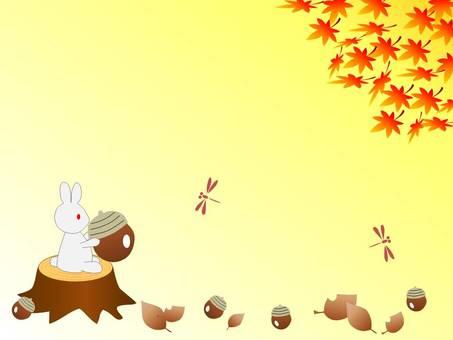 A rabbit that enjoys autumn