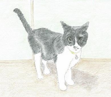 Real Hachi ware cat