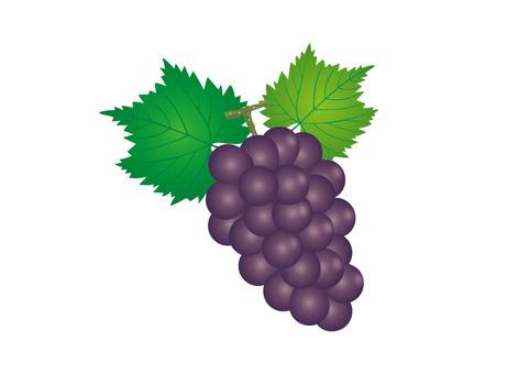 Grape 05