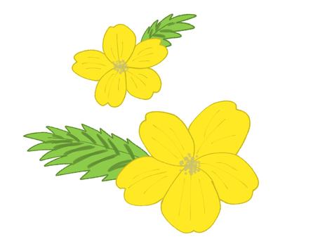 Yamabuki flower