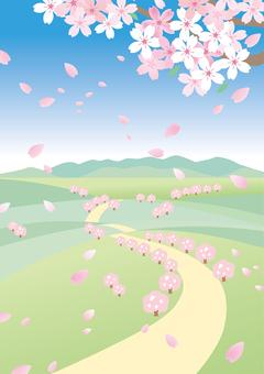 봄 풍경 벚꽃 5