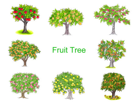 Fruit tree hand drawn illustration