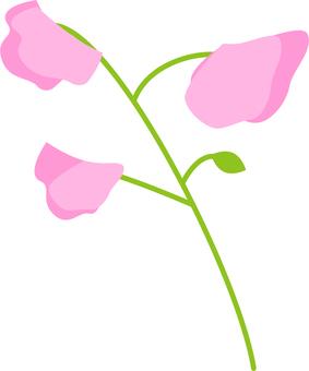 완두콩 꽃