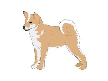 Japanese dog (Shiba inu)