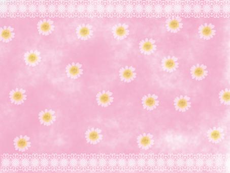 북극의 꽃 분홍색