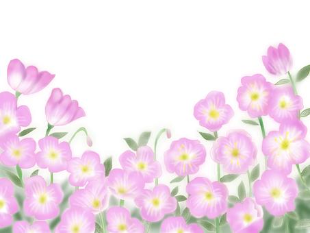 Evening primrose revised edition