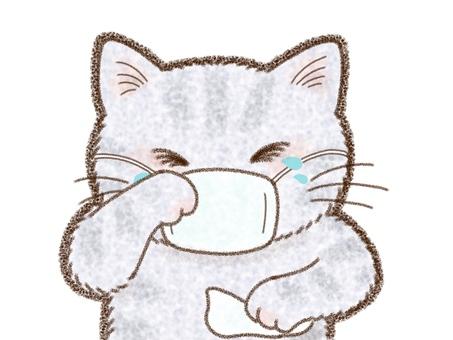Cat pollinosis