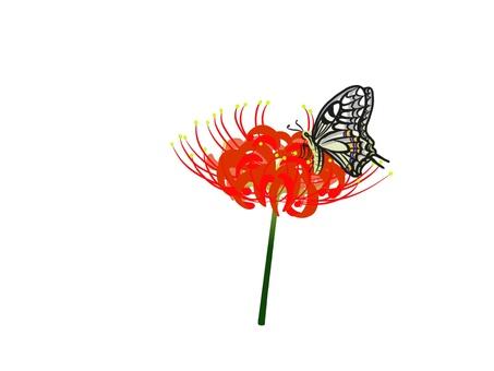 피안 꽃과 호랑 나비