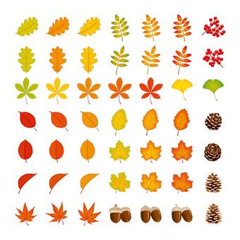 0850_autumn