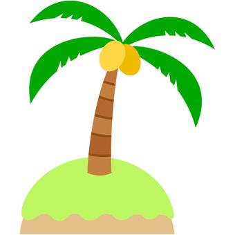 Hawaii · coco palm