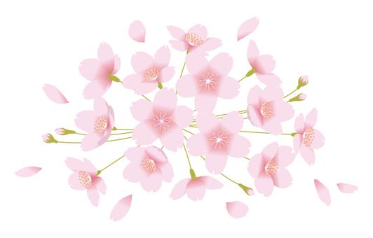 벚꽃 (흰색 배경)