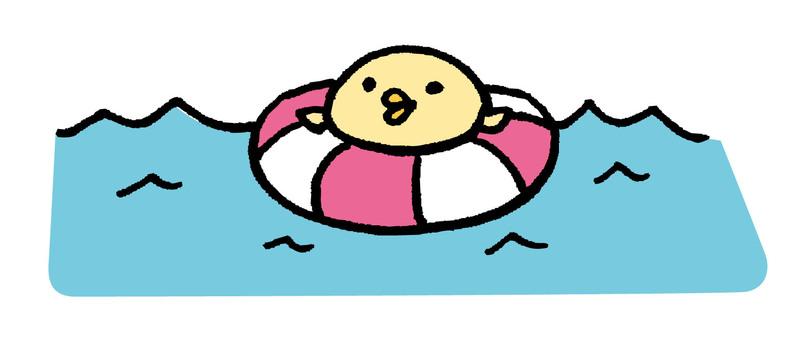 병아리 해수욕