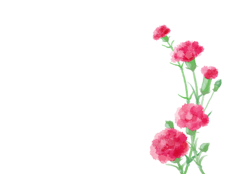 Carnation 6