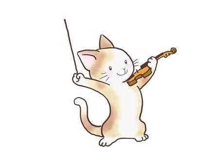 바이올린 고양이 43