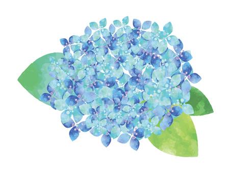 Hydrangea ver01