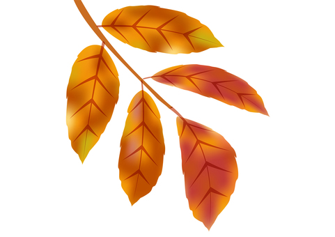 Leaves stained in autumn color 11