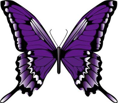 보라색 나비