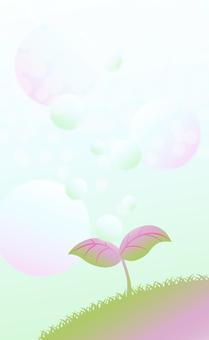粉紅色的芽