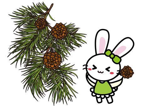 Aroma Usako (Pine)