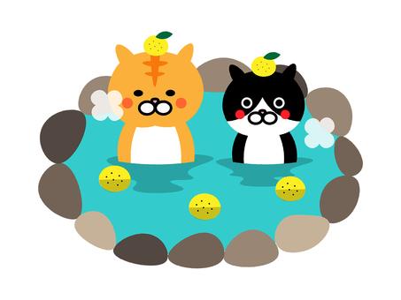 Illustration that a cat is in Yuzu-yu