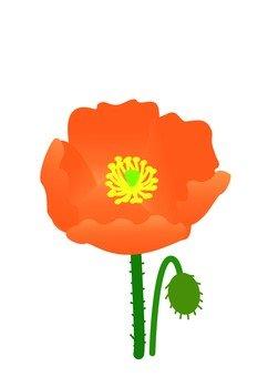 Poppy (orange)