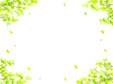 Fresh green branches and leaves frame