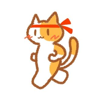 마라톤 고양이