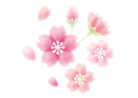 水彩風 桜の花イラストカット