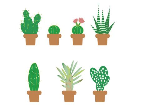 Cactus · foliage plant