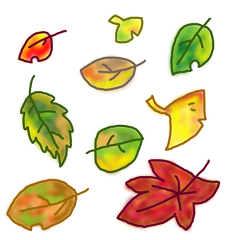 Various fallen leaves
