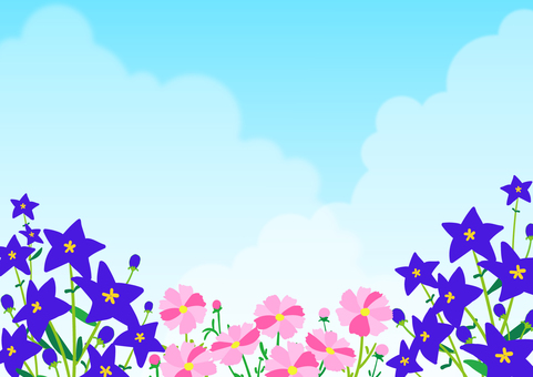 Cosmos and kikyo under the blue sky background