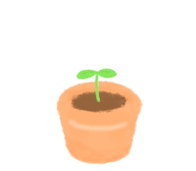 A flowerpot that has sprouted